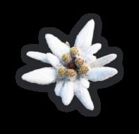 BF_flower